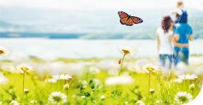 Programme wallon de réduction des pesticides